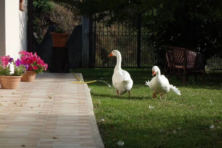 Agriturismo Pilato - Good meals, nature and relax