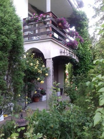 Halebaja