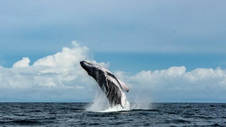 Avistamiento de ballenas (junio-octubre)
