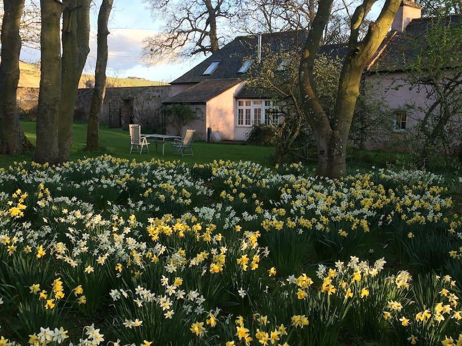 Rear Garden in Spring