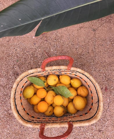 Pick as many lemons as you'd like on your stay!