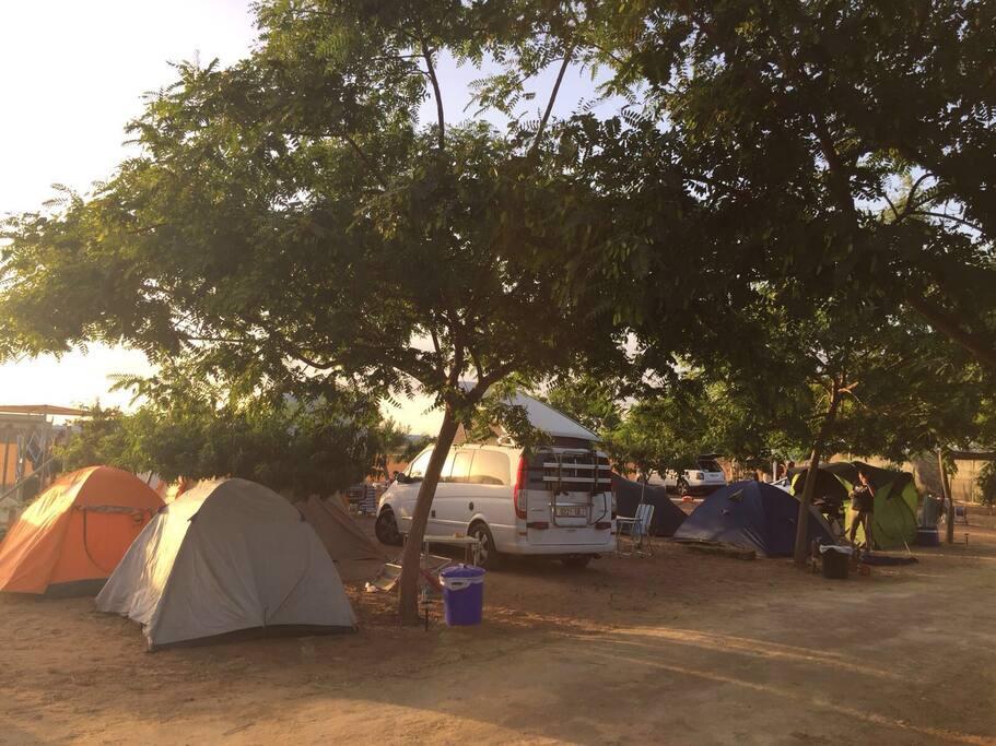 Huéspedes festival Alrumbo 2016