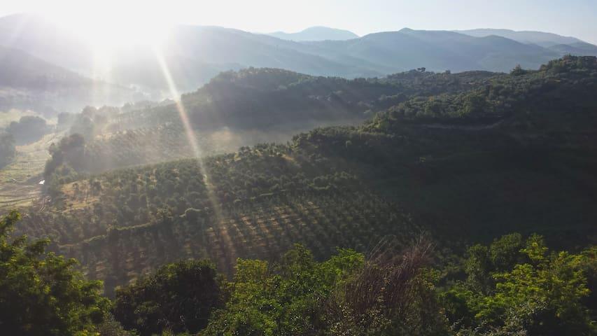 Residenza Francigena - Montelibretti