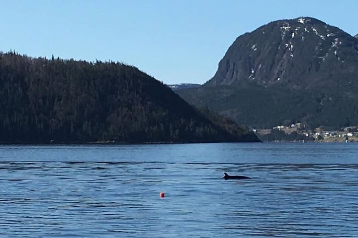 Alone Time in Gros Morne