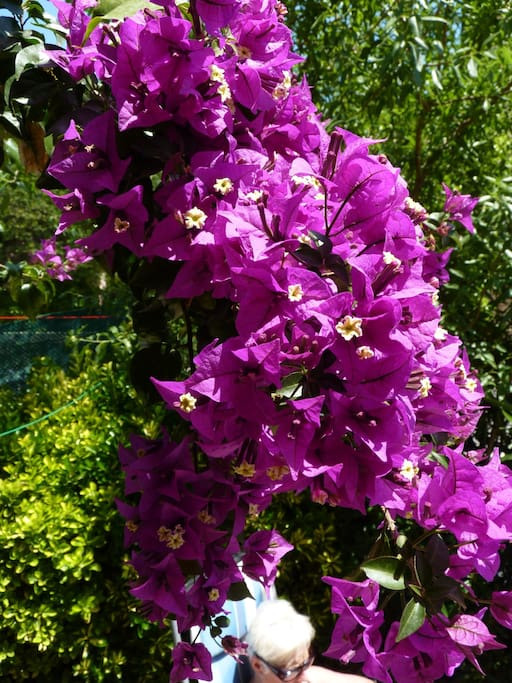 jardinet fleuri (selon saison)
