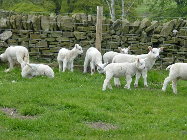 Rural Romantic Shepherds Hut Peak District