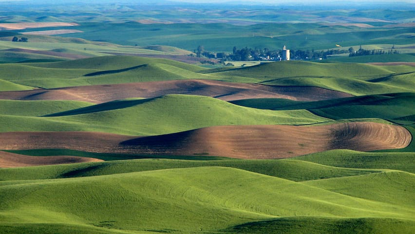 On the Palouse