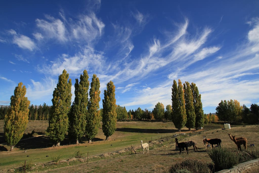 OUR PIECE OF CENTRAL OTAGO