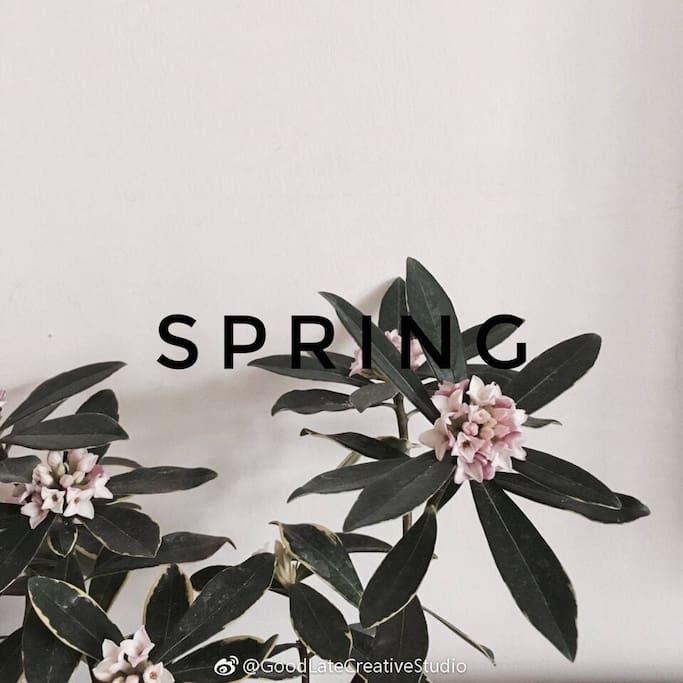 春天Spring