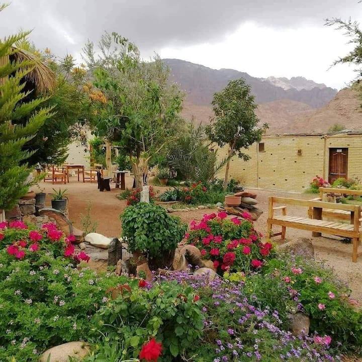 Masoudi Lodge Saint Catherine Egypt Bedouin Camp