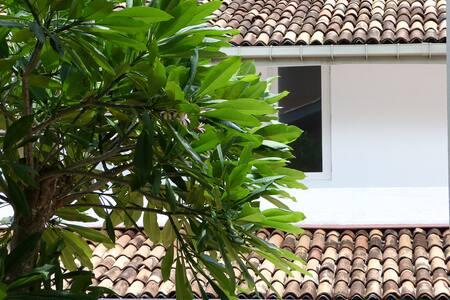 The Almond Tree - Central Colombo Cul de Sac