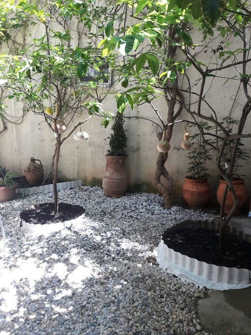 beautiful private garden with orange-lemon trees for shadow and fresh air just for our guests..