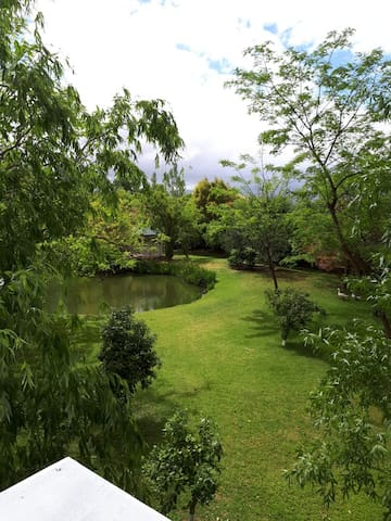 View from Agapanthus, looking out over a small part of our 2.5 acres garden. You have full access to our garden & pool as our guest! This studio was built in 2018, so everything is brand