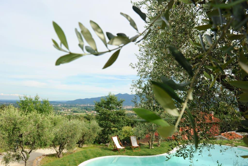 Piscina nell' oliveto e panorama