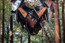 The Pinecone treehouse is suspended between redwood trees 35' above the forest floor