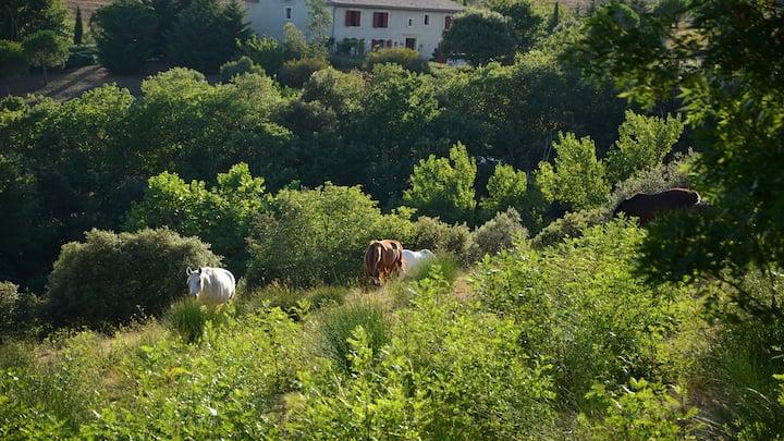 Nature et Confort,gîte 2 à 9 pers prés Carcassonne