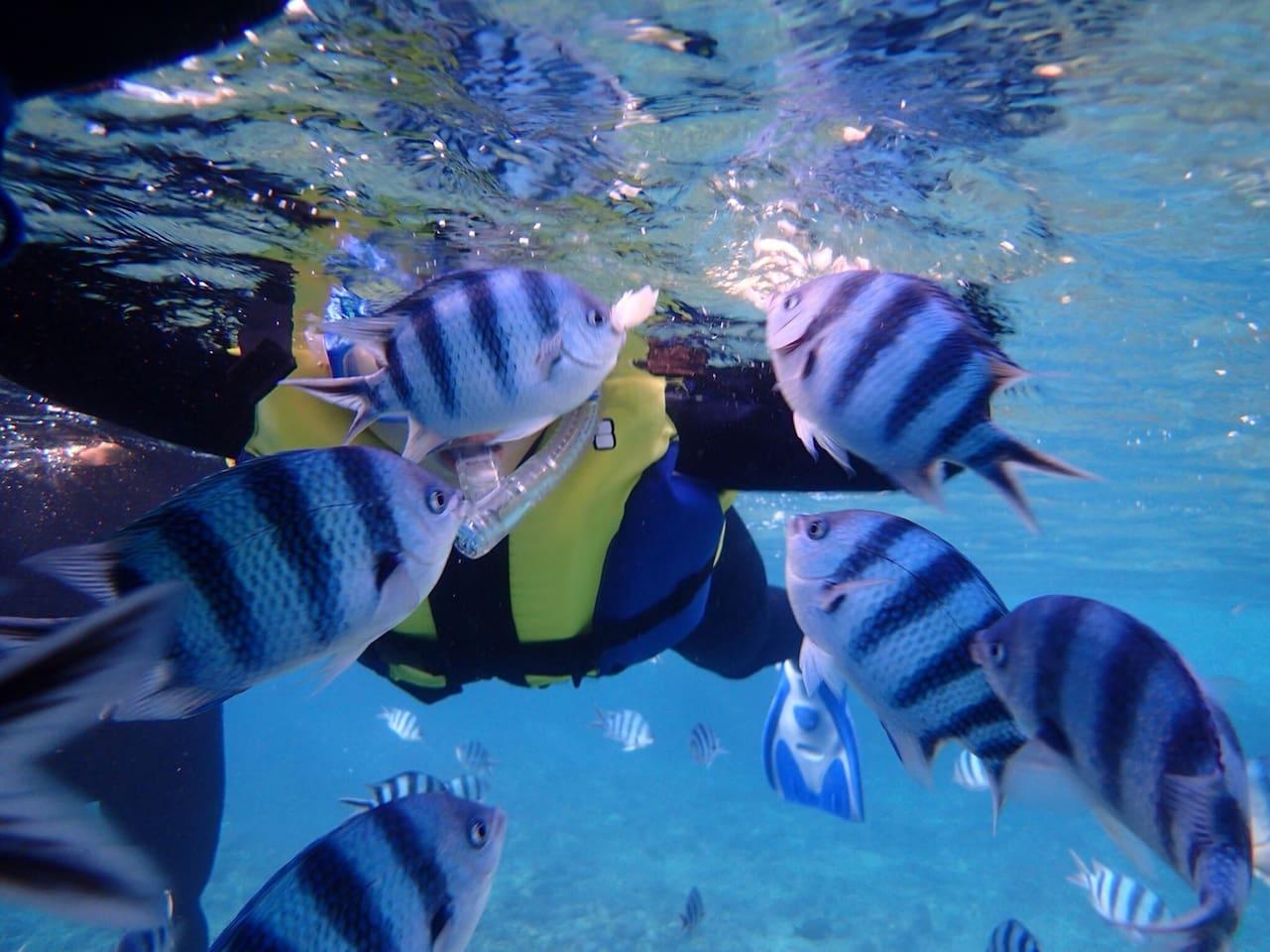 熱帯魚が見れます