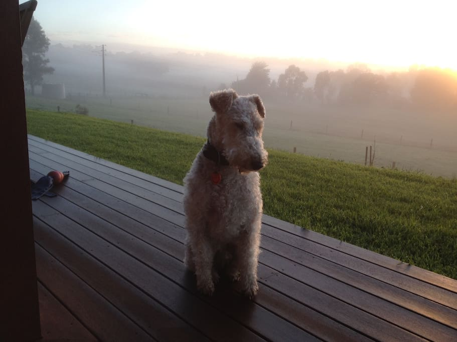 Oscar sitting on the front deck on a Misty Morning