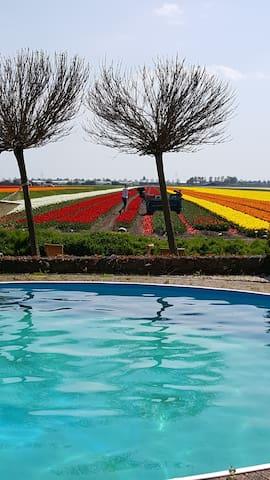 Bed & Breakfast Rosamunde met zwembad en uitzicht - Wervershoof - Appartement