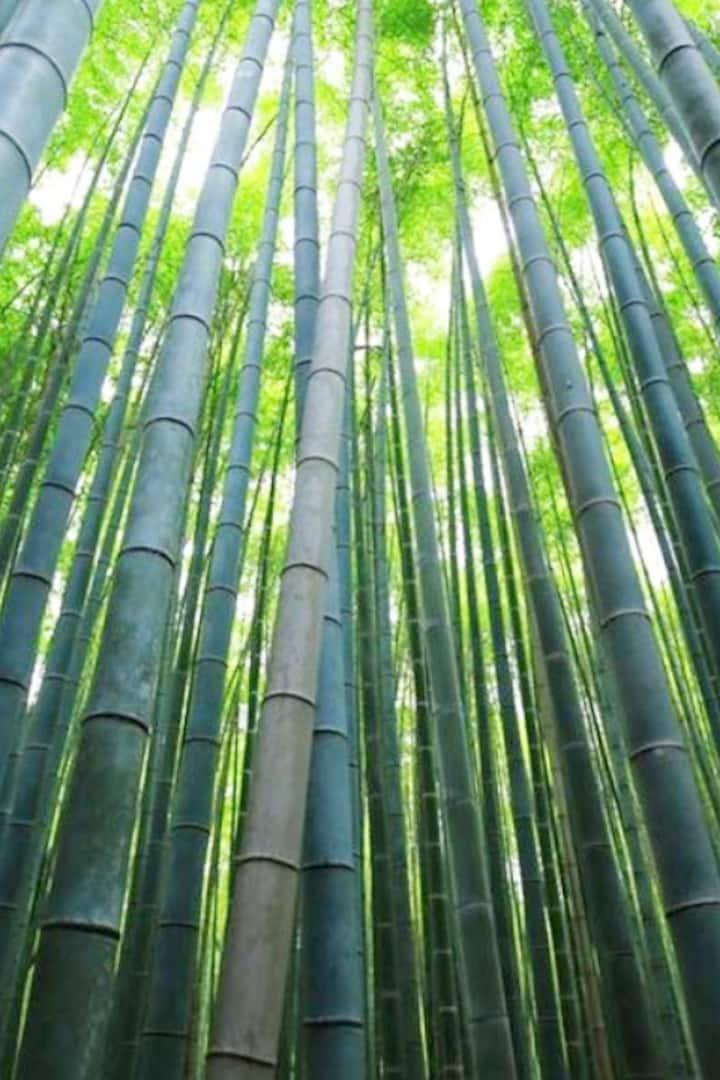 Arashiyama isn't only a choice on bamboo