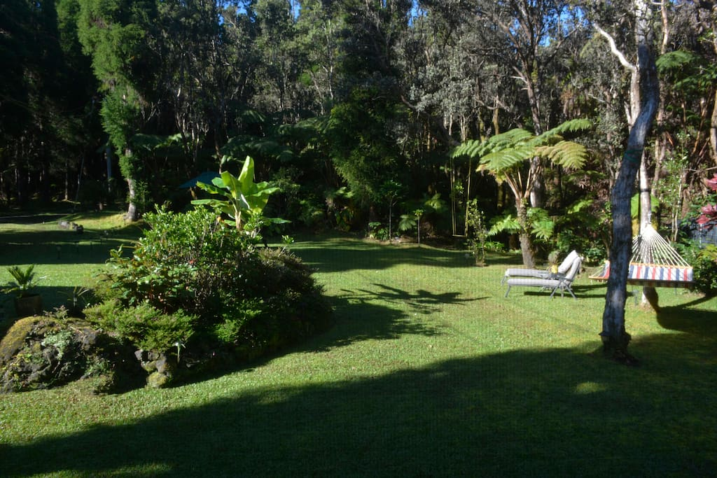 Ohia Forest Yard , for relaxation
