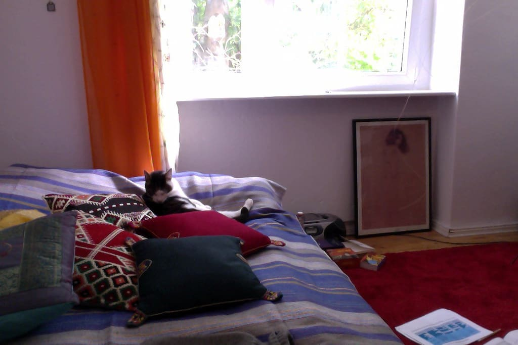my room with cat.