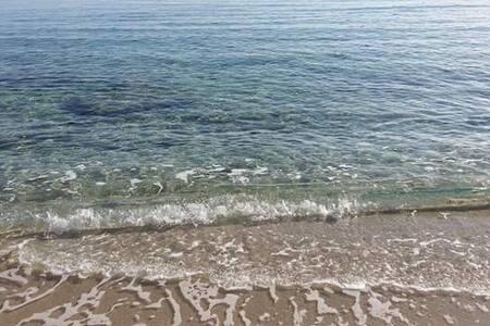 Joli apparemment  pied  dans l'eau