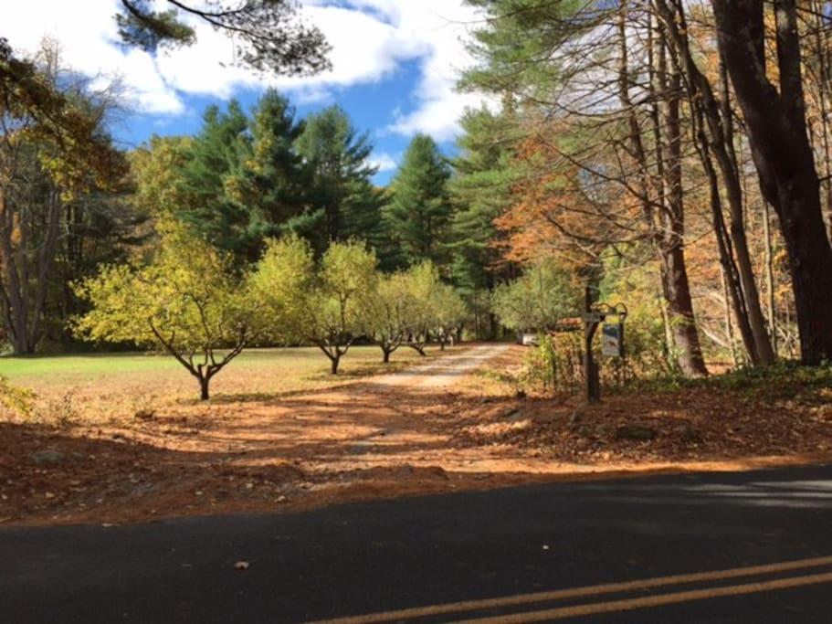 Apple tree lined driveway.