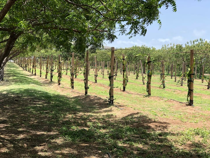 Hacienda Verde Tahiti - Casita del Vivero