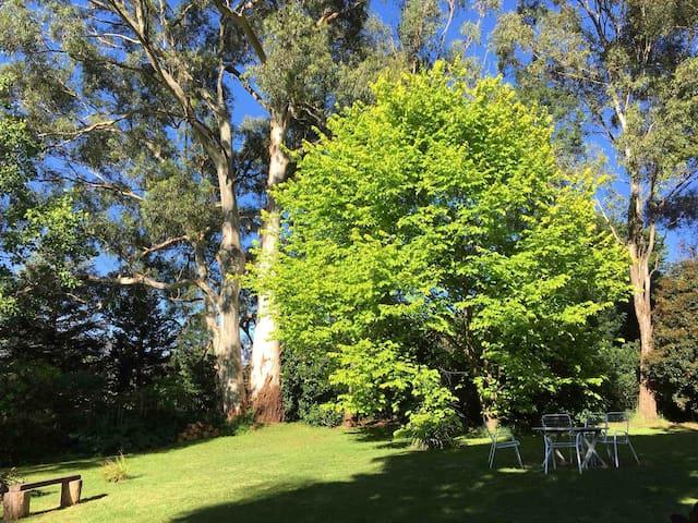 Back garden.
