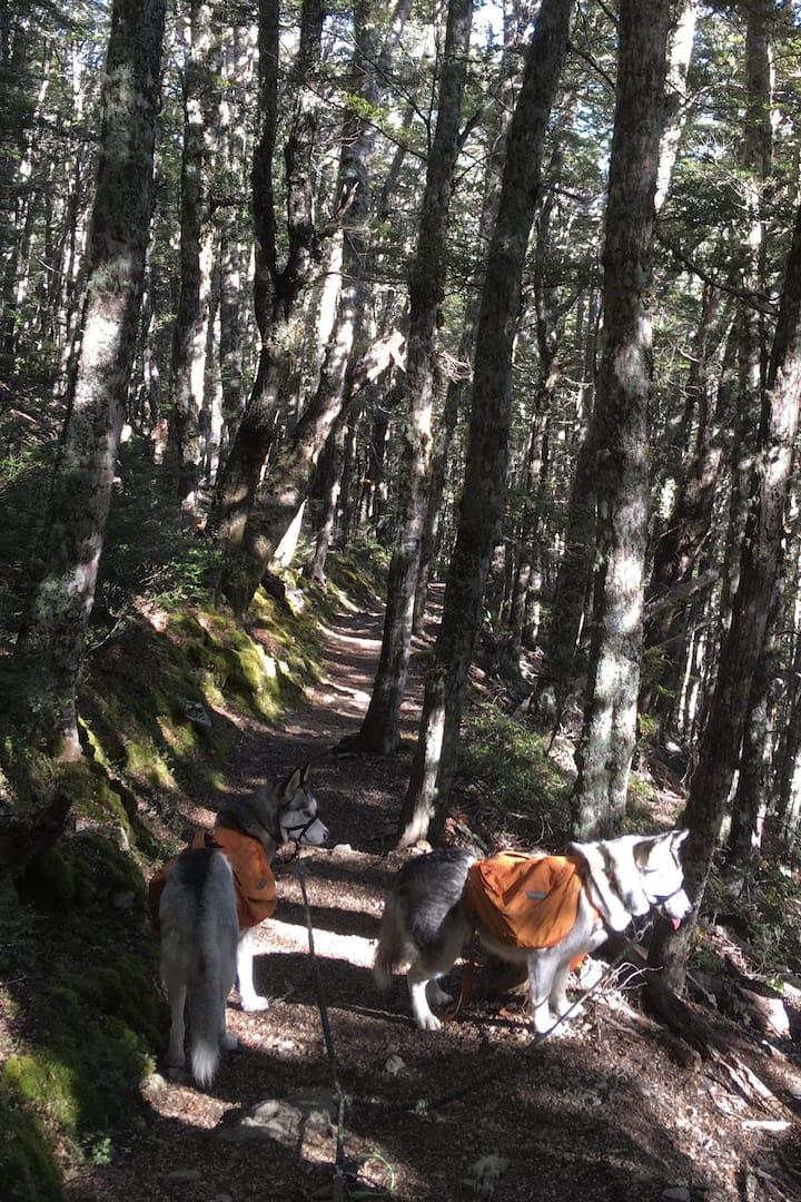 Cragieburn Forest Alternitive