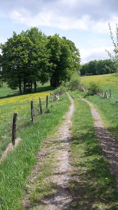 Der Weg hinter unserem Haus