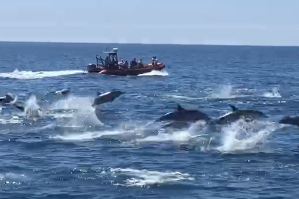 Take a whale watching tour, sometimes you actually see hundreds of dolphins jumping out of the water! Amazing!