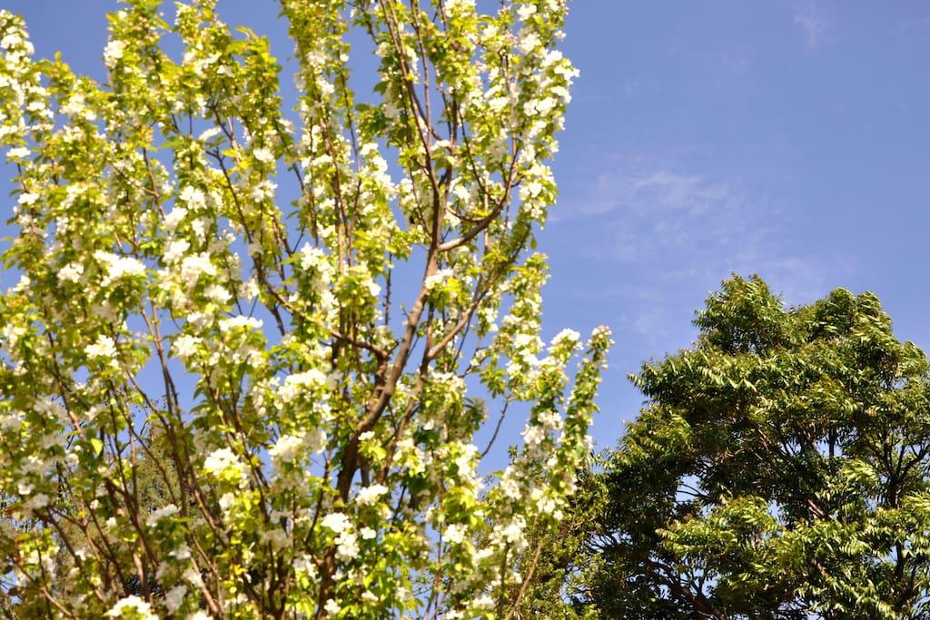 看庭前花开花落,望天空云卷云舒