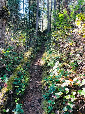 Trail from stairs from dock , heading back up to the Treehouse