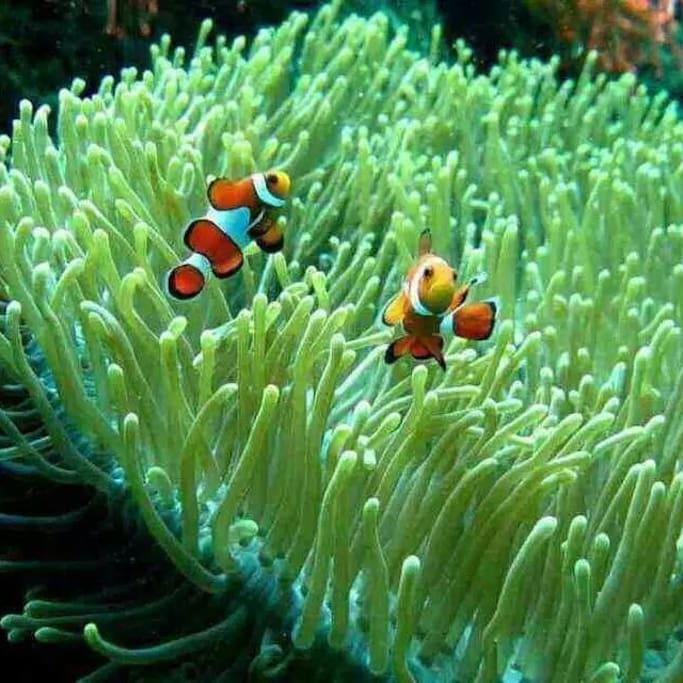 swim from mdf beach resort direct to the marine sanctuary