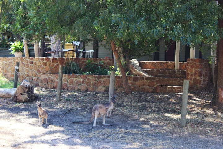 Local kangaroos spend a lot of time here.