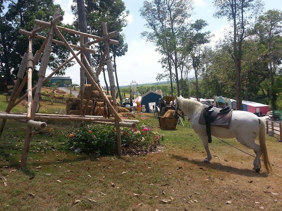Hose Riding Panorama Top View Park and Fun
