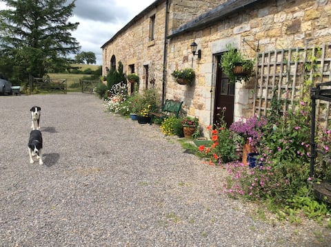 Cottage, Farm & Forest Haven. Dog Walks & Cycling