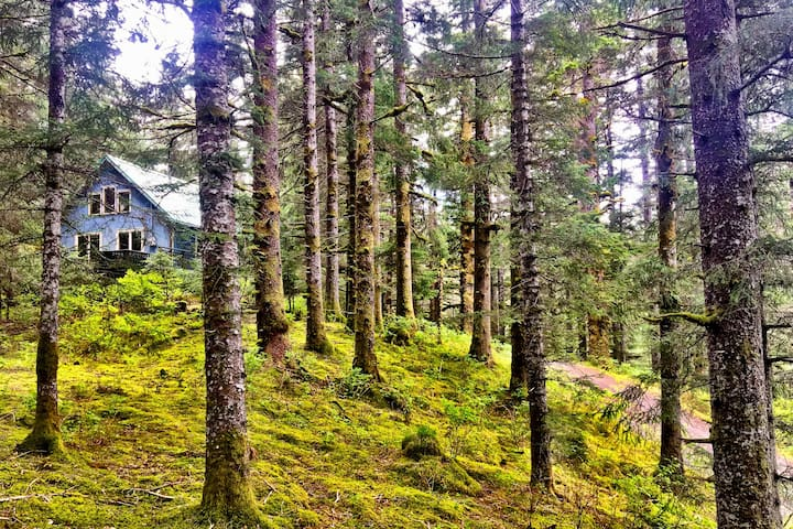 SpruceHaven~ cozy forest home just steps to beach