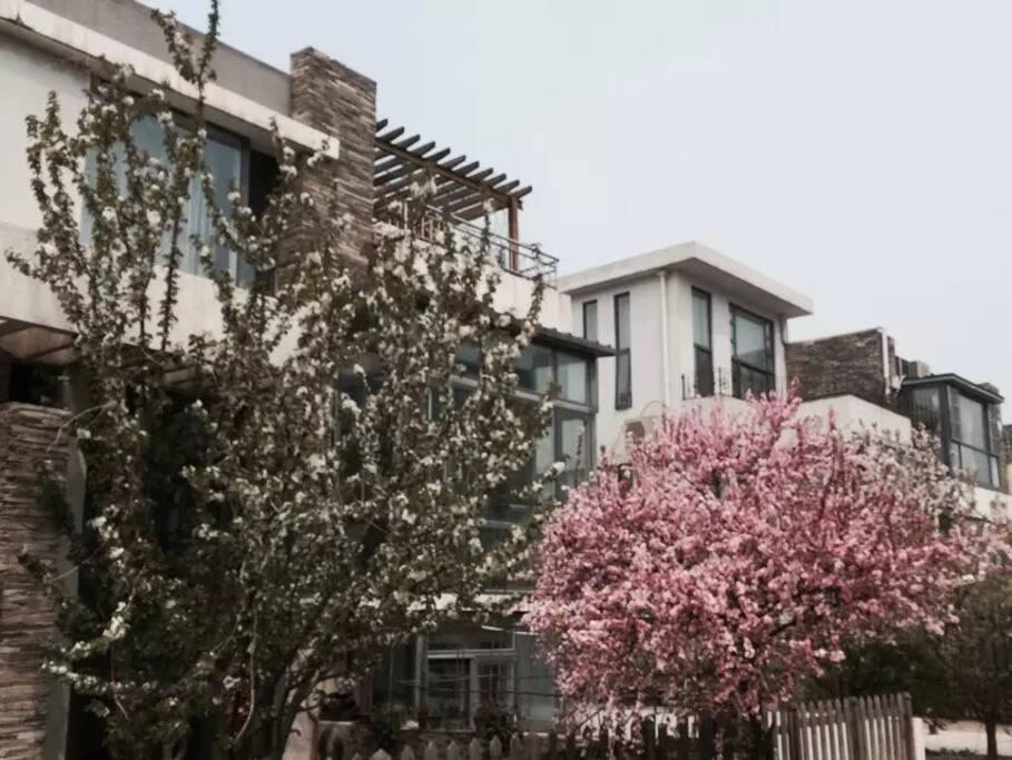 联排别墅低密度花园社区,春天可赏樱花、海棠、紫藤。。。可采摘樱桃。秋天可烧烤、摘山楂、柿子
