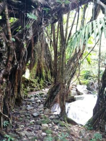 "Nongblai, or ""village of gods"", has a total of 16 living root bridges in its vicinity. To reach this village which is unconnected by road, one needs to hike down a daunting 2500 feet. The trail that leads to Nongblai is a mere 4 kms from Langkawet."