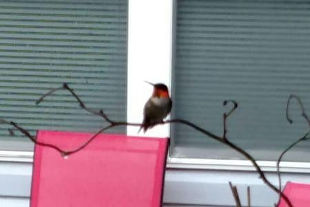 Back yard Guest