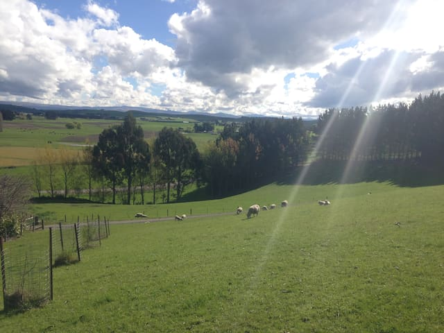 Gum Tree Farmstay B&B with Farm Tour - Oamaru - Bed & Breakfast