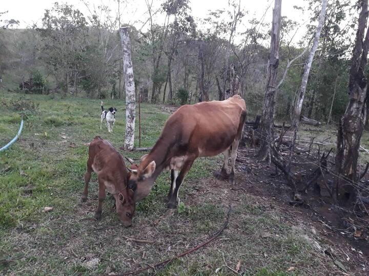 Lolas Farm