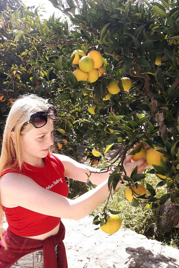 Collecting oranges