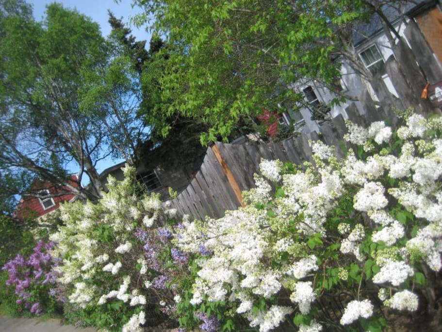 Summertime at the Lilac Property.