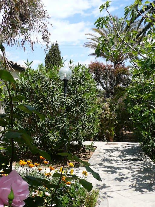 Mediterraner Garten / mediterranean garden