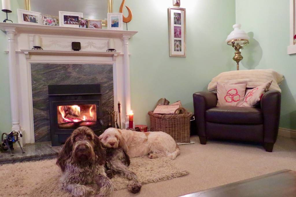 Dogs Chilling by the fire.