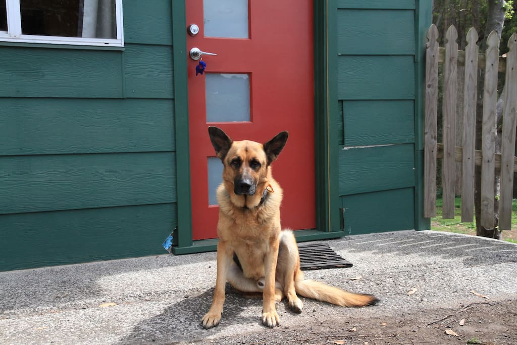 Our dog Atlas - he will come and say hello however we can lock him away if frightened of dogs. He is very friendly.